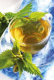 Stinging nettle tea stock photo