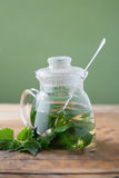 Stinging nettle ( Urtica dioica ). Nettle and freshly made nettle tea royalty free stock images