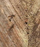 Stingless bee living in metal hole close up Stock Image