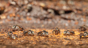 Stingless bee living in metal hole close up Royalty Free Stock Photos