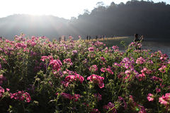 Stingoung, Thailand Royaltyfria Bilder