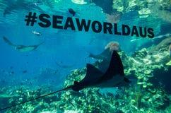 Stingray σε έναν εν πλω κόσμο ενυδρείων στο Gold Coast Στοκ Εικόνες
