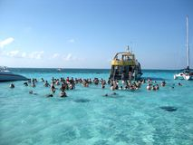 Stingray City. Caribbean excursion in Grand Caymon Stock Image