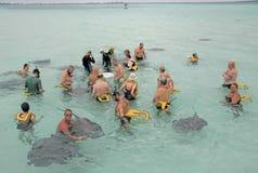 Cayman Island Stingrays Royalty Free Stock Image