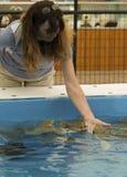 Stingray delle alimentazioni di mano della donna, ranch dello struzzo di Cogburn del gallo, Pic Fotografia Stock