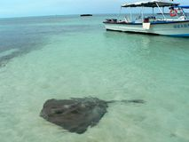 Stingray and fisherboat Stock Photography