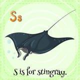 Stingray Stock Photos