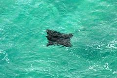 Stingray - Fraser Insel Stockfotografie