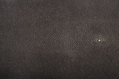 Stingray leather, hide. Stingray exotic fish leather, brown color skin Royalty Free Stock Image
