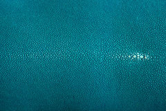 Stingray leather, hide. Stingray exotic fish leather, Turquoise color skin Stock Photography