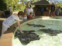 A Stingray Pool Entertains Visitors at a Marine Park Royalty Free Stock Photos