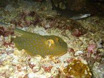Stingray and Shark stock photography