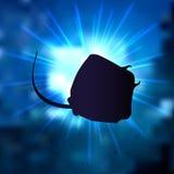 Stingray. Vector illustration of the stingray Stock Image