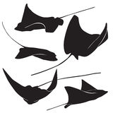 Stingray vector silhouette Stock Photography