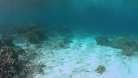 Stingrays on a coral reef 4k. Stingrays on a colorful coral reef in shallow water. 4k footage stock footage