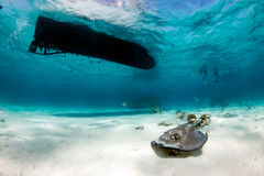 Stingrays under a boat Royalty Free Stock Images