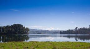 Stingung, reflexion av sörjer trädet i en sjö Arkivfoto