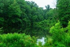 stingung, reflexion av sörjer trädet i en sjö, Fotografering för Bildbyråer