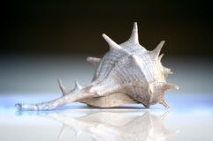 Stingy shell. On gradient background Royalty Free Stock Images