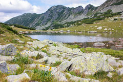 Stinisoara lake in the Retezat mountains. Beautiful small lake in the Retezat mountains Royalty Free Stock Photography