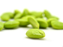 Stink bean Royalty Free Stock Images