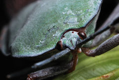 Stink Bug. A macro photo taken on a shield / stink bug at a park Stock Image