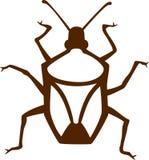 Stink Bug Royalty Free Stock Photos