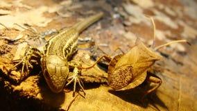 Stink Insect en Hagedis royalty-vrije stock afbeeldingen