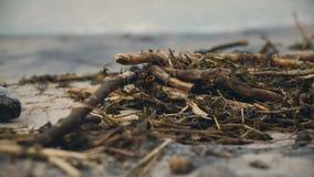 Stinken Sie die toten Fische, die auf verunreinigter Küste, der Giftmüll verfallen, der Natur schädigt stock video