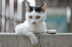 Stinkende Katze Stockbild
