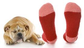 Stinky feet Stock Photography