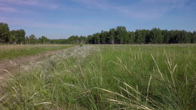 Stipa grass. West Siberian Plain stock video footage