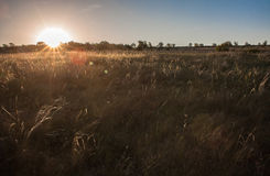 Stipa in morning Ukrainian steppe. Royalty Free Stock Photography