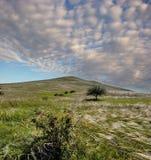 Stipa pennuta sulla collina, Crimea, Russia Fotografie Stock