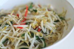 Stir-fried bean sprouts stock photo