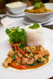 Stir Fried Chicken with Holy Basil and steamed ric Royalty Free Stock Photography