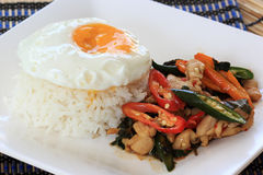 Stir Fried Chicken with Holy Basil and steamed rice (Krapao Gai) Royalty Free Stock Image