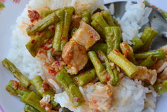 Stir-fried curry yard long bean with fat pork Thai easy meal Royalty Free Stock Photo
