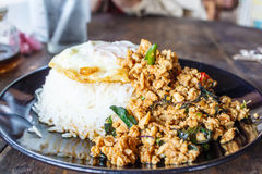 Stir fried minced pork. And Thai holy basil with fried egg and rice  (Thai call Pad ka prao moo sap Royalty Free Stock Images