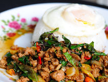 Stir-fried pork with holy basil and fried egg Stock Images