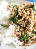 Stir-fried pork with holy basil Stock Images