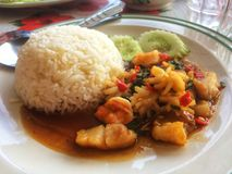 Stir-fried seafood and basil. Rice topped with stir-fried seafood and basil royalty free stock photos