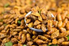 Stir fried silkworms. Thai food Royalty Free Stock Photography