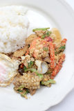 Stir-fried Soft-shelled seafood in curry powder & Thai jasmine rice Royalty Free Stock Image