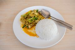 Stir-fried squid with curry powder. Thai food, stir-fried seafood with rice stock photography