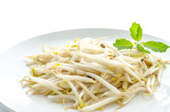 Stir fry bean sprout Royalty Free Stock Photo