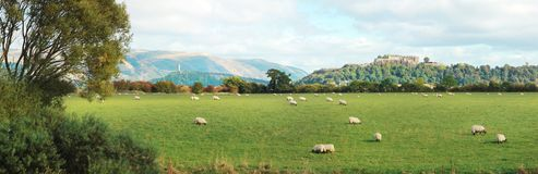 Stirling castle. In background with sheep grazing in Scotland, UK Stock Images