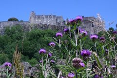 Stirling Castle, Scotland with a foreground of thistle stock image