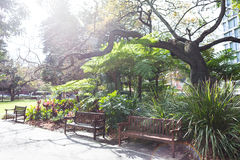 Stirling Garden. At perth WA. Near government house Stock Photography