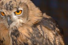 stirra för 3 owl arkivfoton